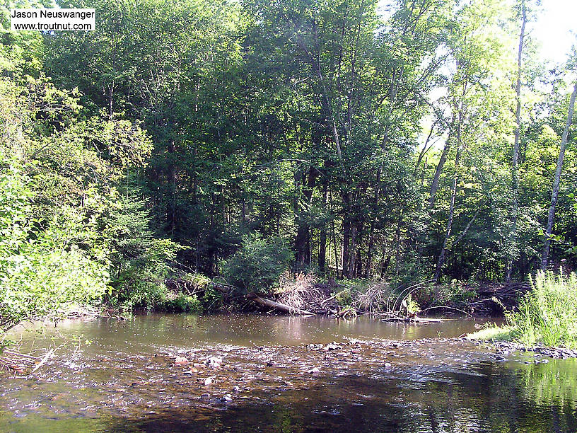 A riffle in a small stream feeds into a deep pool that holds several large brookies. From Devil's Creek (Rusk County) in Wisconsin.