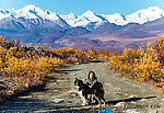 Lena and Taiga on the Maclaren River Trail. This trail heads north toward the Maclaren Glacier and West Fork of the Maclaren River, uphill on the west side of the Maclaren River. From the Maclaren River Trail in Alaska.