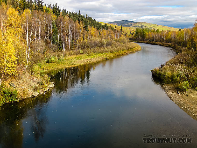 View upstream from Elliott  Highway bridge From the Chatanika River in Alaska.