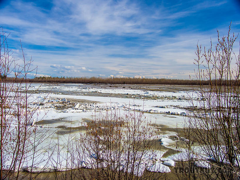 The last contiguous ice on the Tanana near town. On the right side of the photo, the river's original ice still extends all the way across. A rapid flow of water and ice is pushing in toward it from the left. Moments later, the original ice gave way and opened up a free-flowing channel packed with truck-sized icebergs. From the Tanana River in Alaska.
