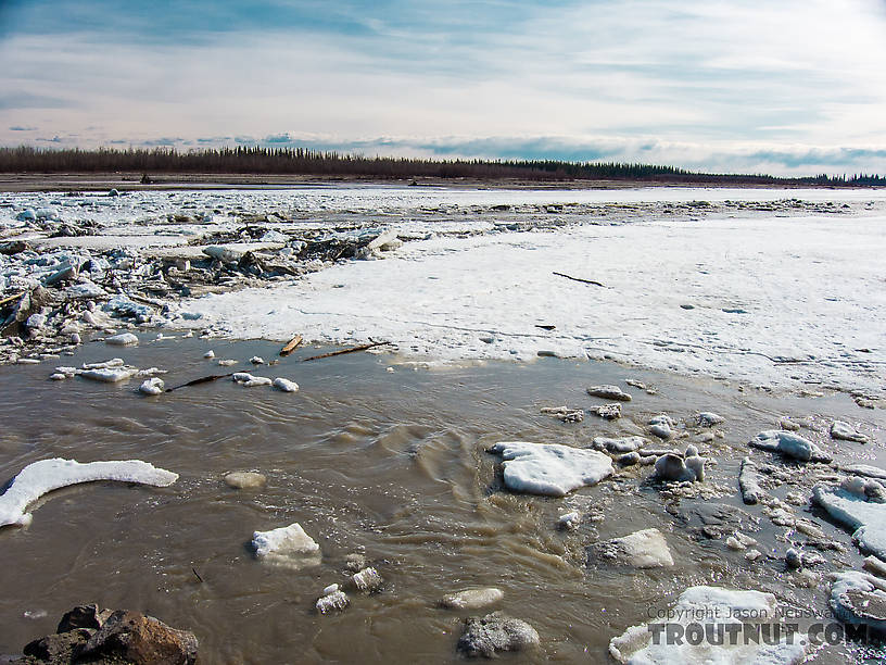 Break-up on the Tanana From the Tanana River in Alaska.