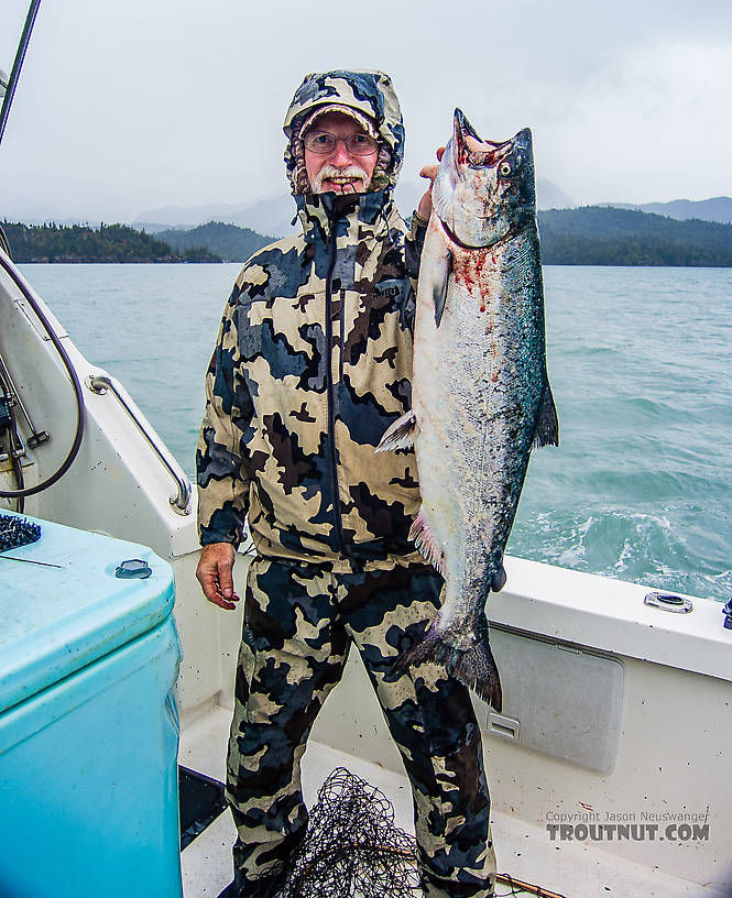 Fishing cook inlet for halibut and ketchemak bay for king for Salmon fishing bay area