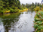 Quartz Creek near Cooper Landing From Quartz Creek in Alaska.