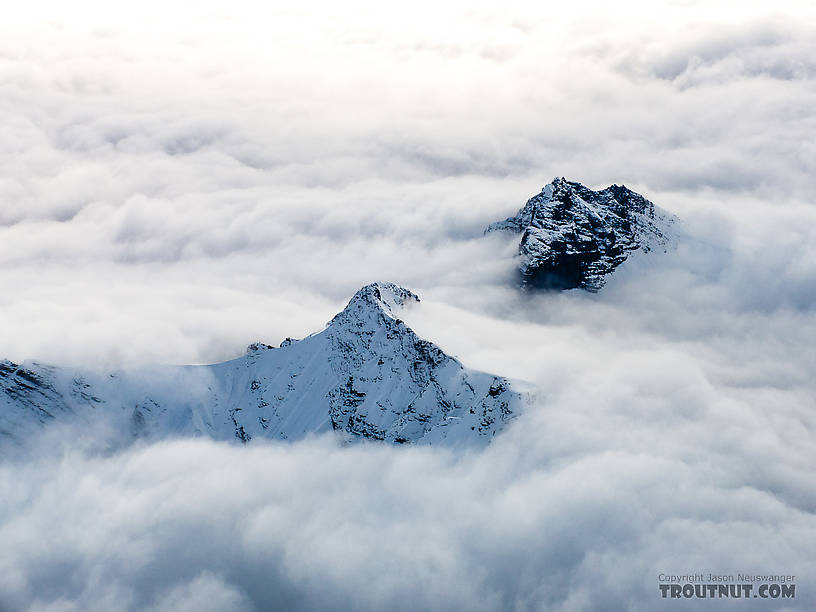 Small peaks poking through the clouds From Denali National Park in Alaska.