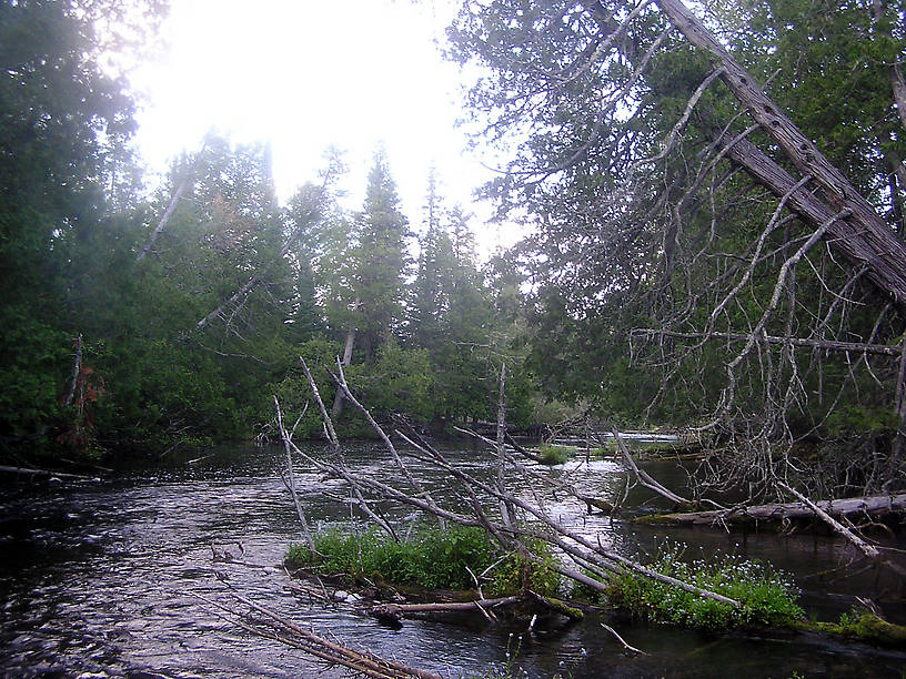 From the Bois Brule River in Wisconsin.