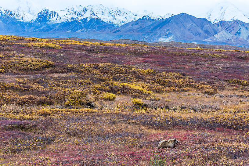 From Denali National Park in Alaska.