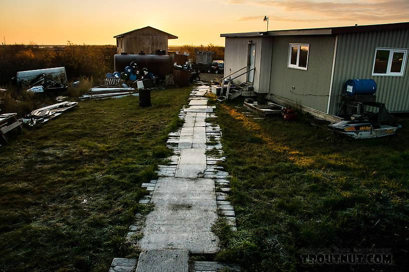 Frosty morning back in Selawik From Selawik in Alaska.