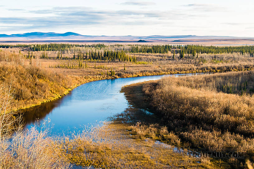 View from atop the permafrost slump From the Selawik River in Alaska.