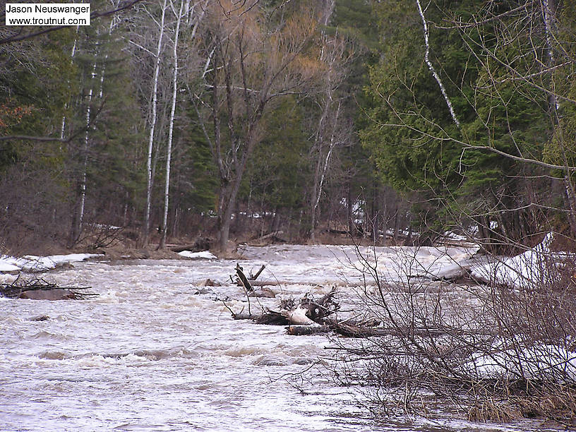 Spring rain has this steelhead river up and roaring. From the Bois Brule River in Wisconsin.