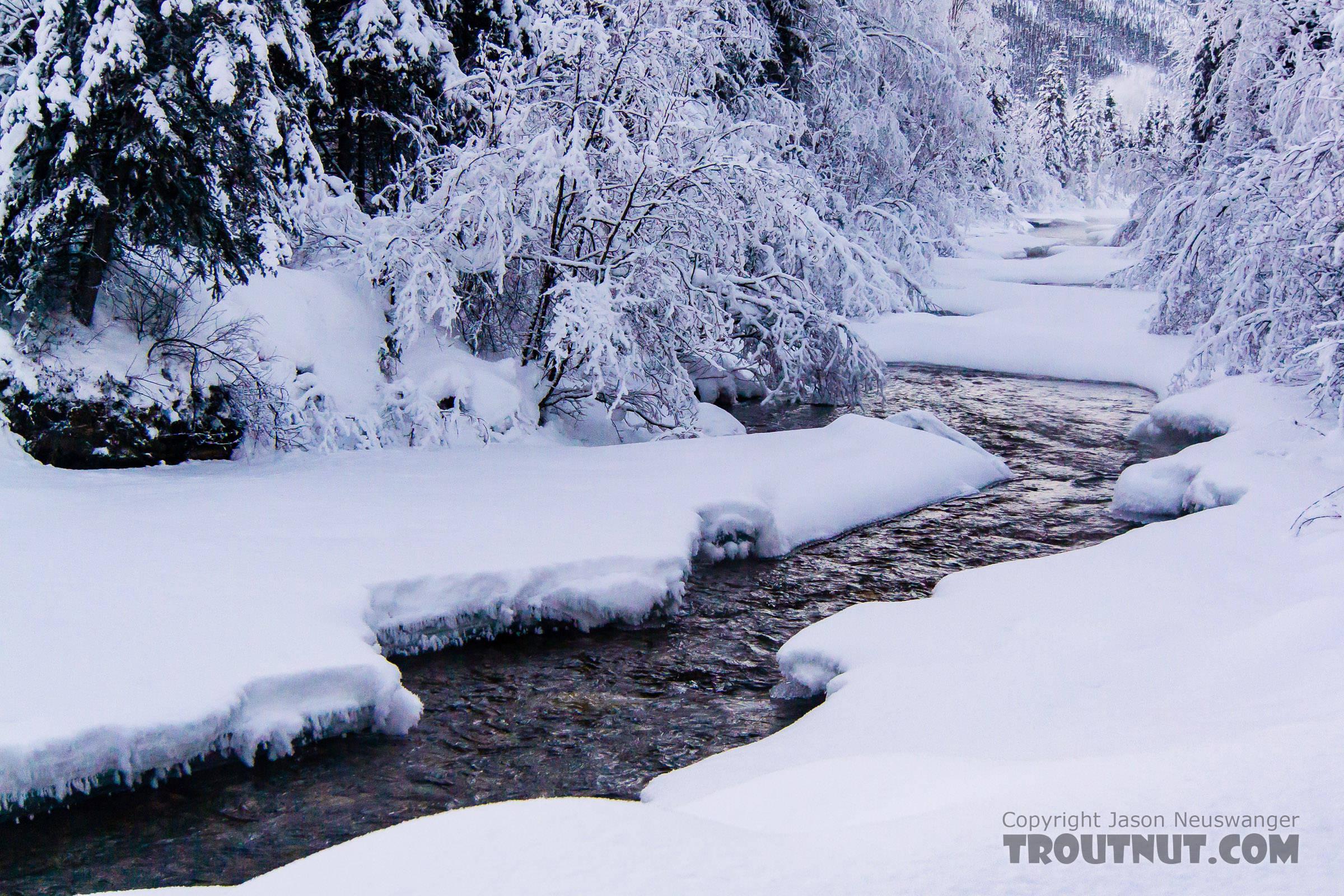 From Mammoth Creek in Alaska.