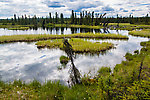 Small lake seen along the boggy hike into the river From the Gulkana River in Alaska.