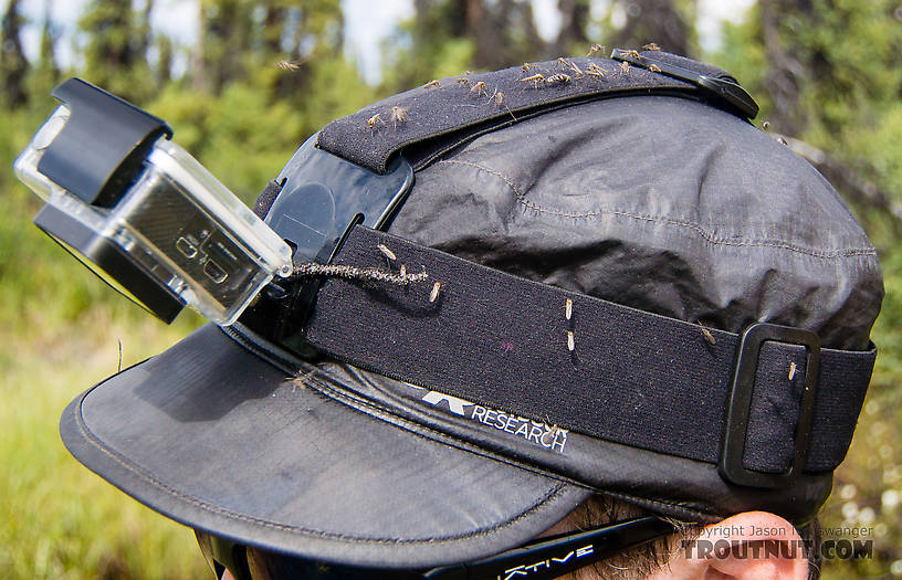 Typical mosquito coverage on my hat during the hike in From the Gulkana River in Alaska.