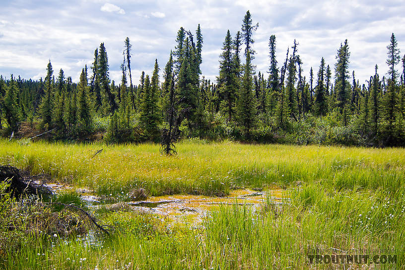 "The ""trail"" often disappeared completely into large swaths of muddy marsh grass or peat bogs From the Gulkana River in Alaska."