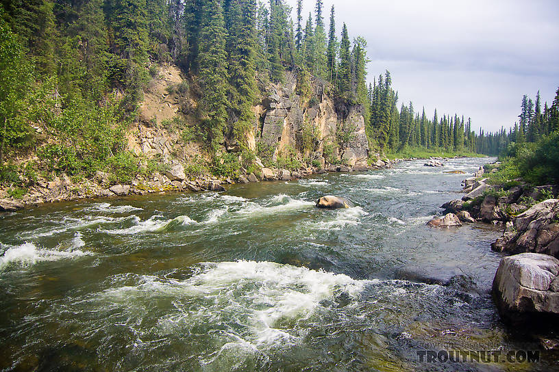Looking upstream From the Gulkana River in Alaska.