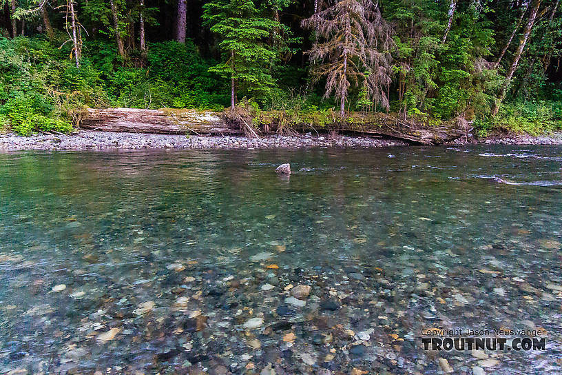 From the South Fork Stillaguamish River in Washington.