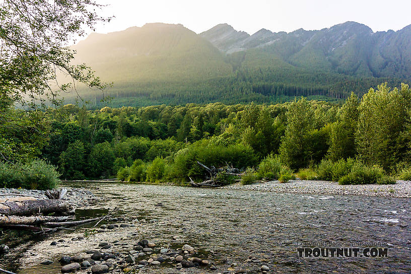 From the North Fork Stillaguamish River in Washington.