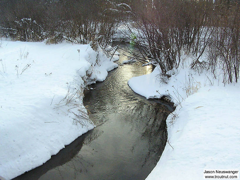 This tiny spring creek is extremely fertile, and I sampled many interesting insects I didn't find anywhere else.  The water was completely open even though other nearby spring creeks were frozen over and the snow was three feet deep. From Schacte Creek in Wisconsin.