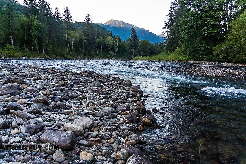 The middle fork snoqualmie river for Snoqualmie river fishing