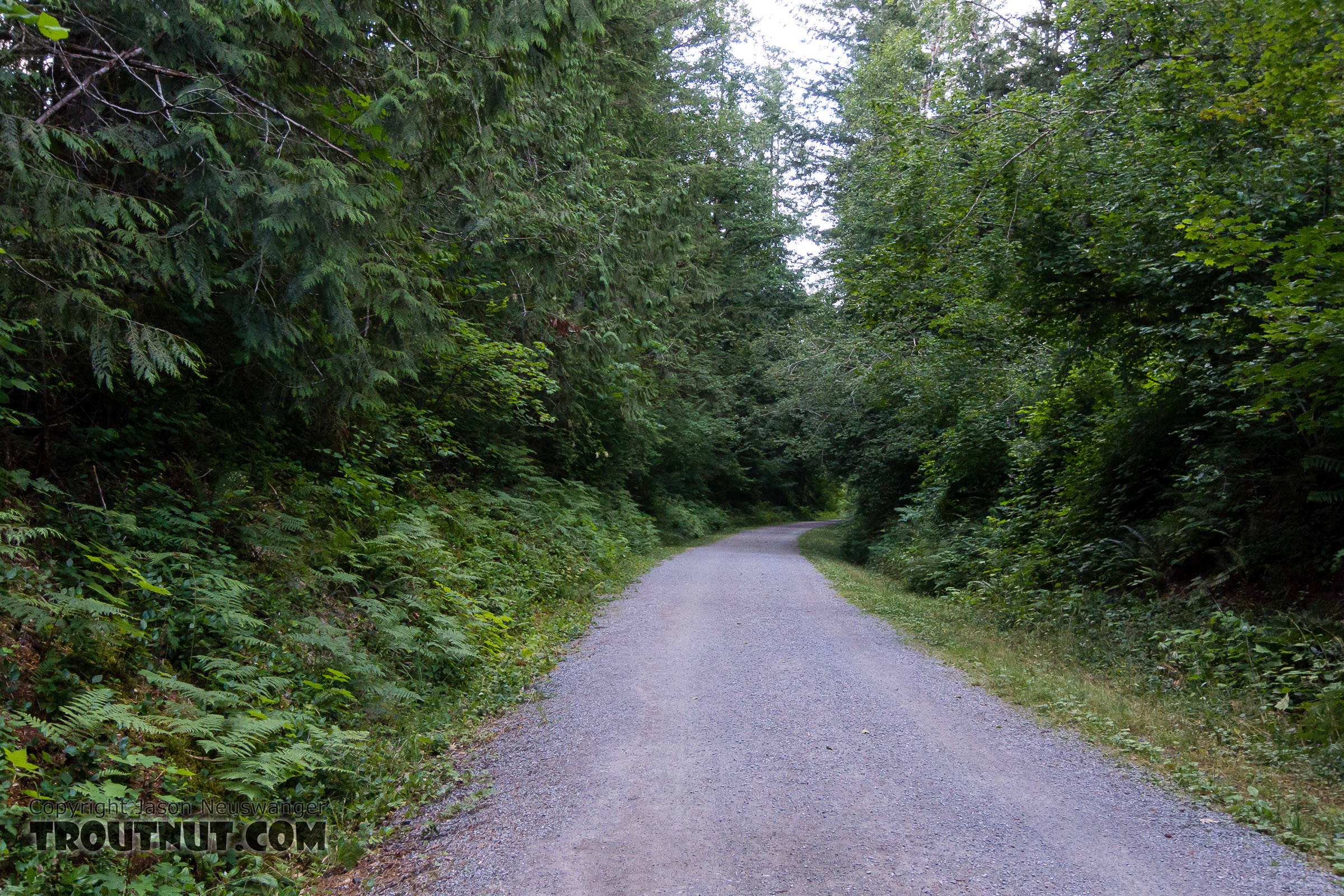 Cedar River Trail -- easiest access I've ever had to a non-roads From the Cedar River in Washington.