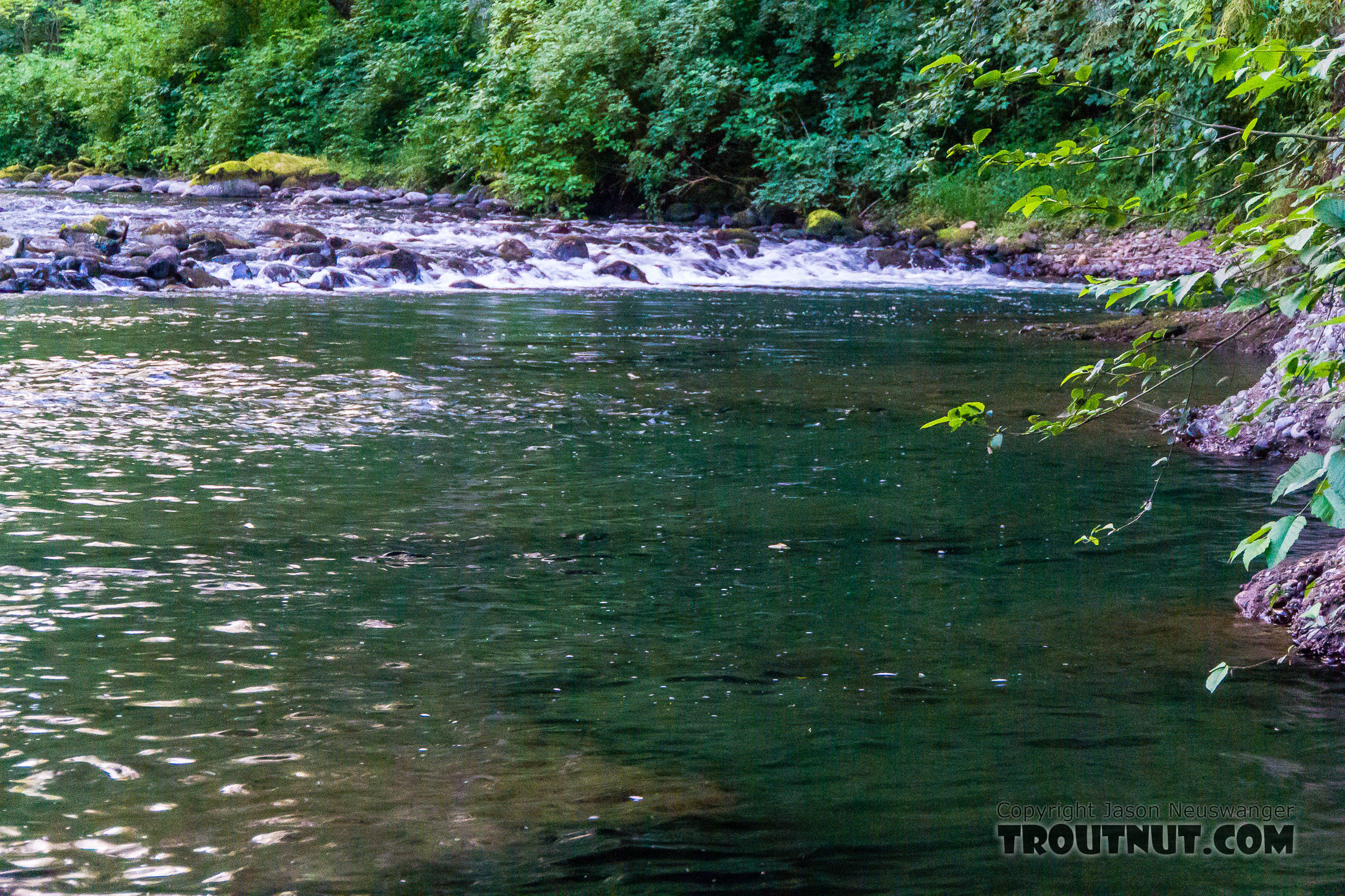 Picture from for Washington fly fishing forum