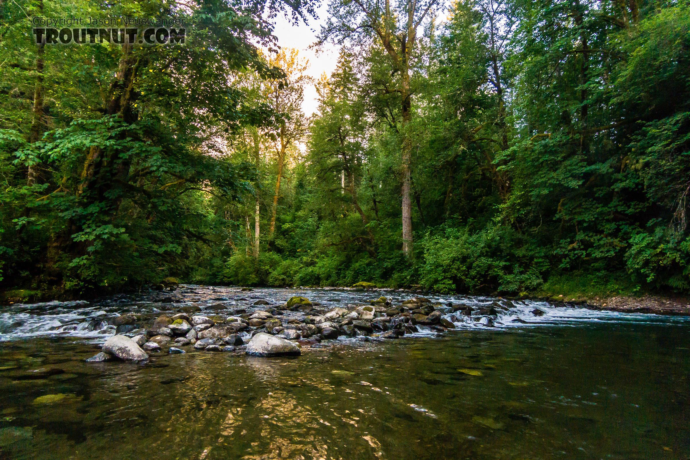 From the Cedar River in Washington.