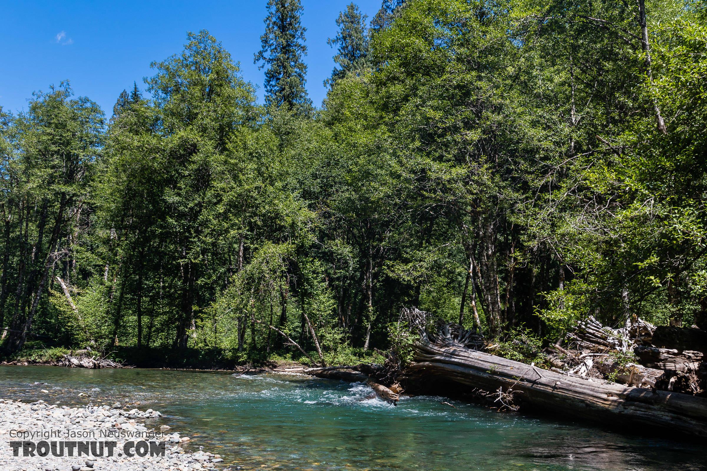 From the Ohanopecosh River in Washington.