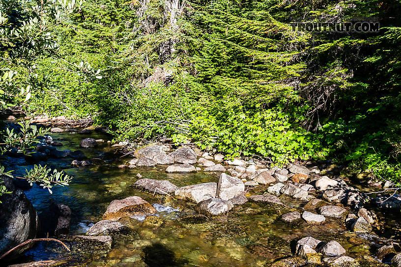 From Mystery Creek # 200 in Washington.