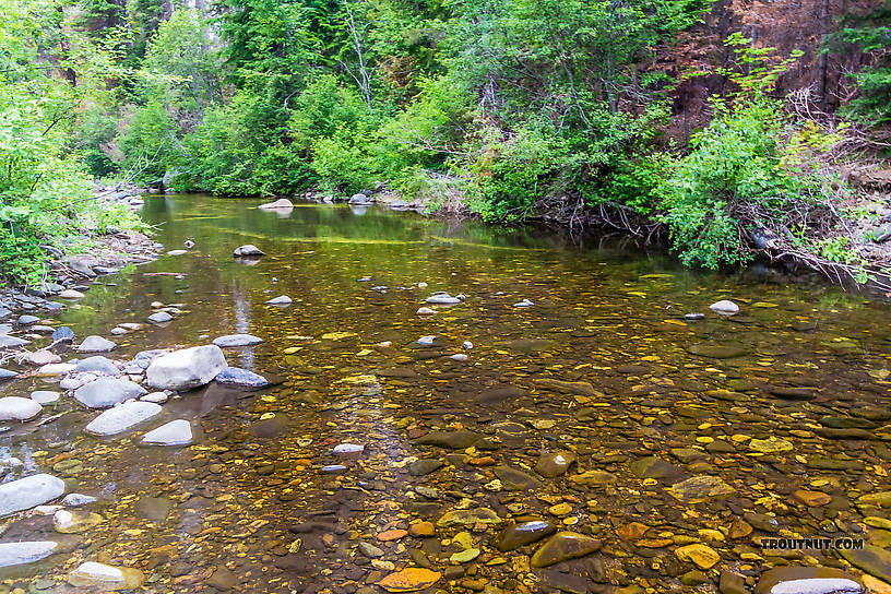 From the West Fork Teanaway River in Washington.
