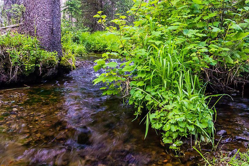 From Mystery Creek # 199 in Washington.