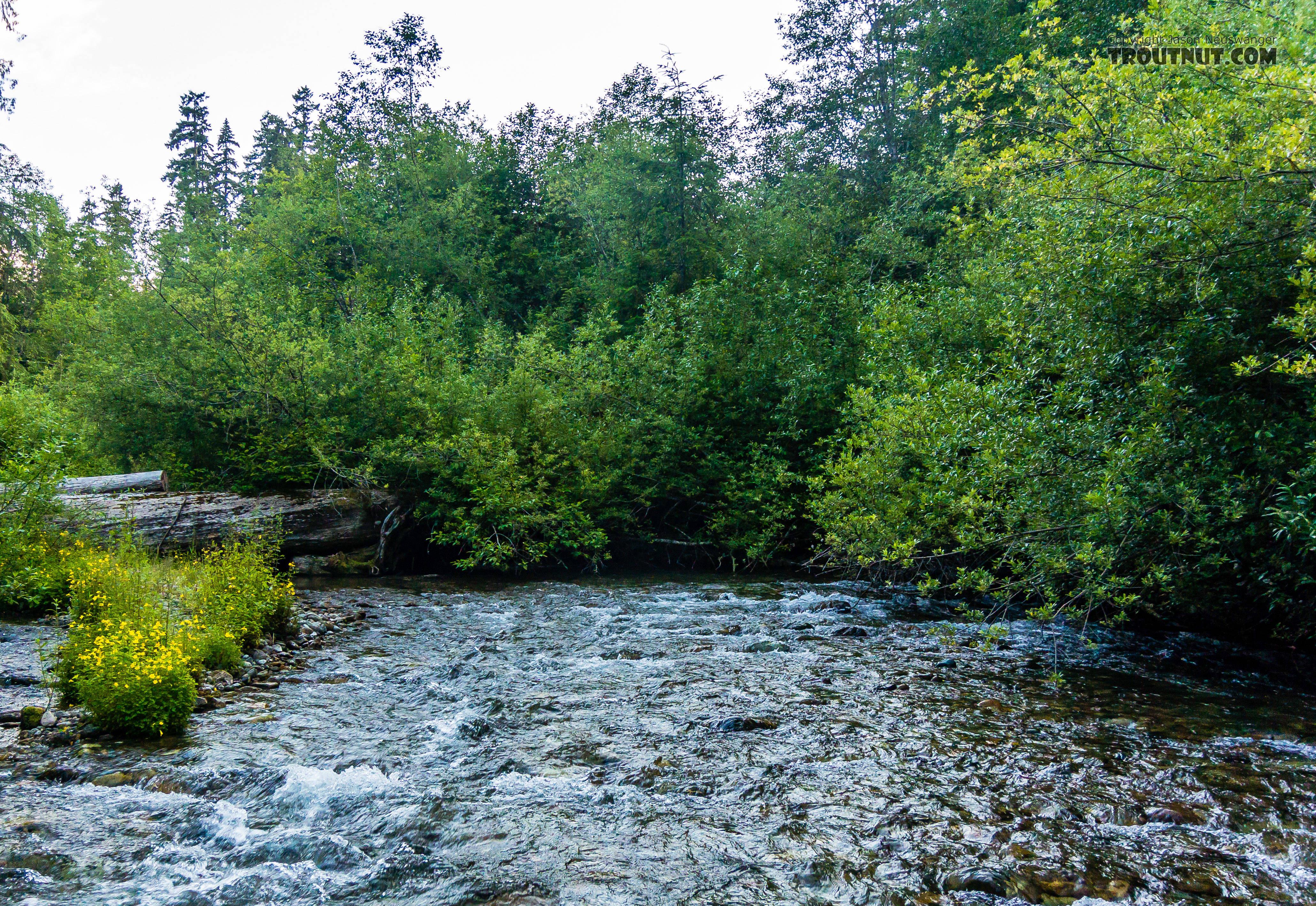 From Huckleberry Creek in Washington.