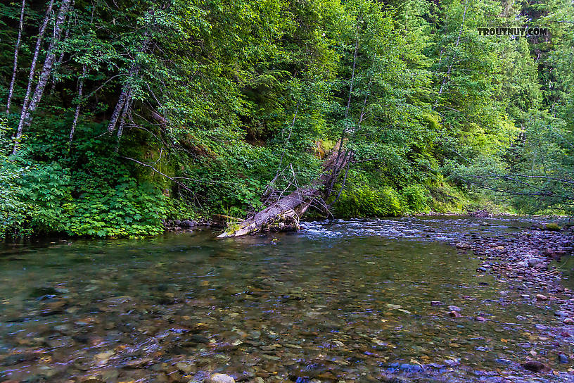 Huckleberry Creek From Huckleberry Creek in Washington.