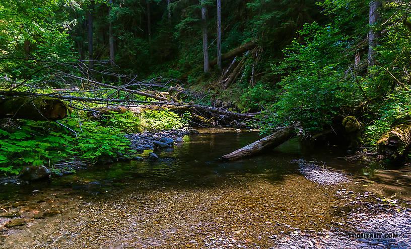 From Barnes Creek in Washington.