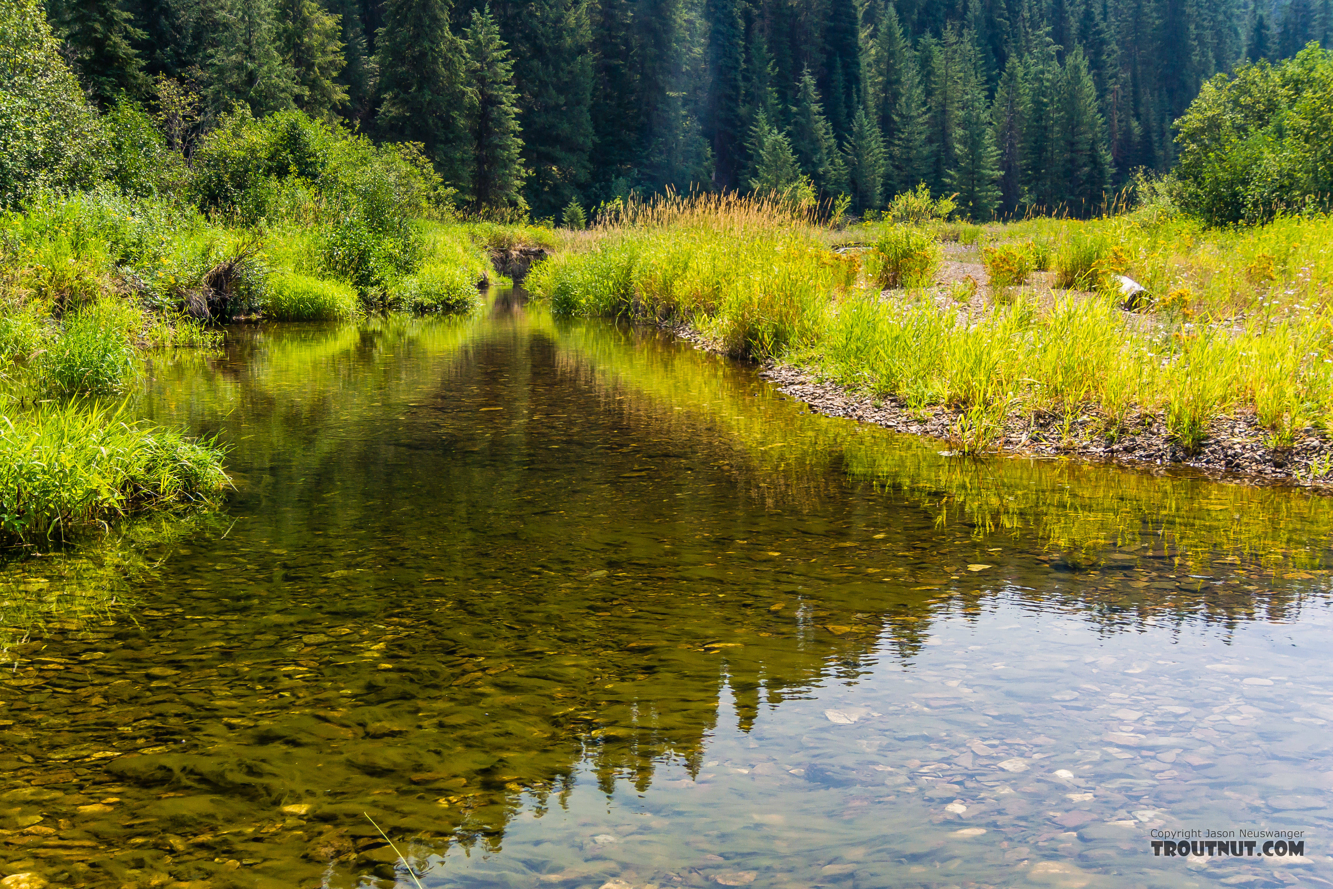 From Tepee Creek in Idaho.