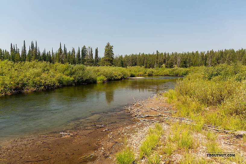 From the Mystery Creek # 217 in Wyoming.