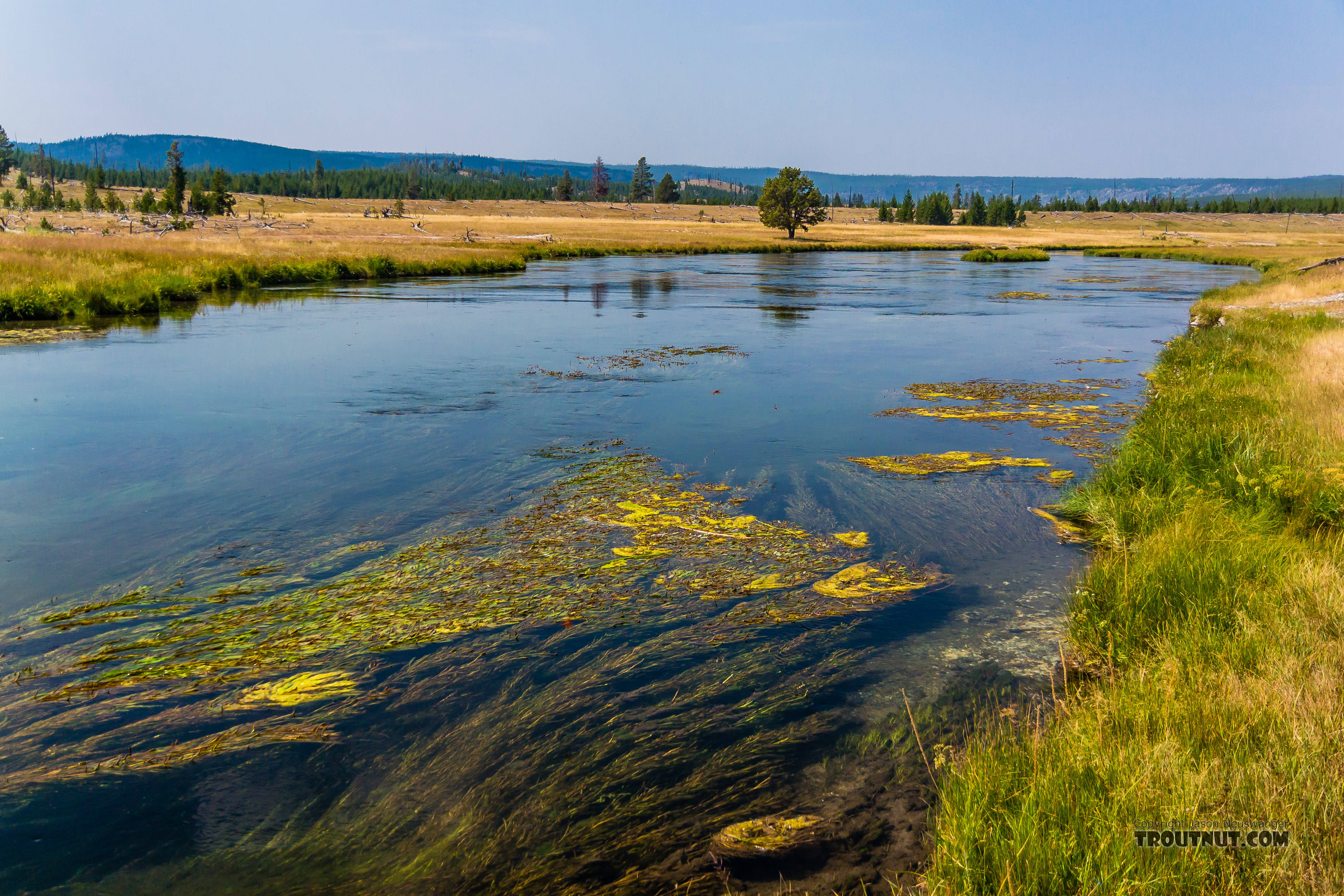 From the Firehole River in Wyoming.
