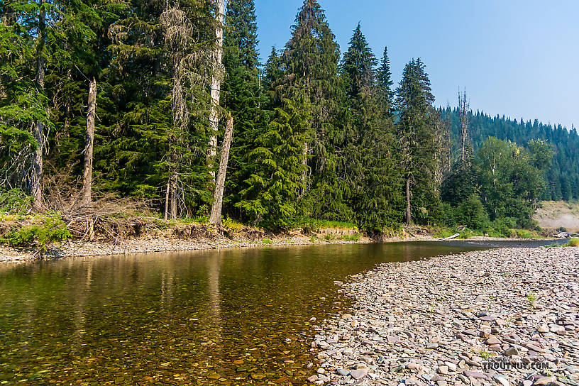 From the North Fork Couer d'Alene River in Idaho.