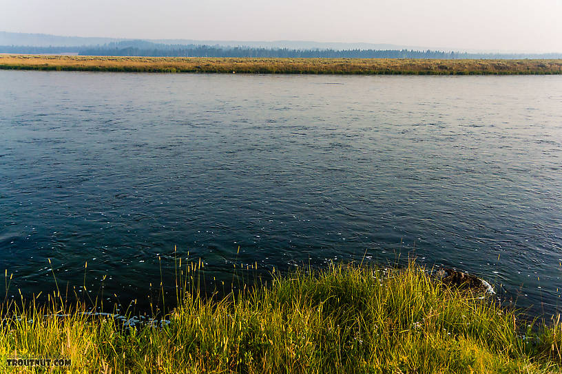 I was fairly astonished to see a river so wide that could be waded all the way across. From the Henry's Fork of the Snake River in Idaho.