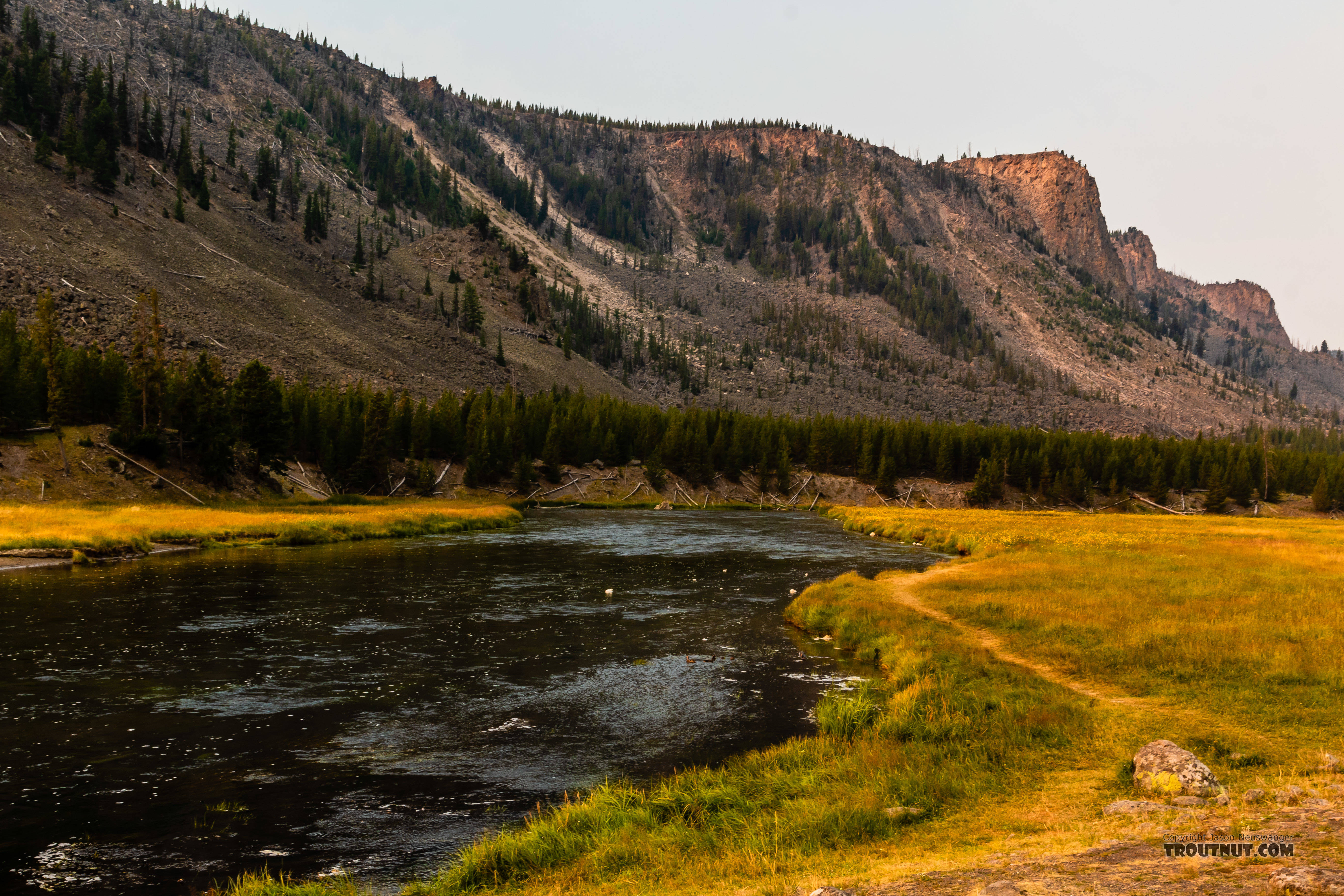 From the Madison River in Wyoming.