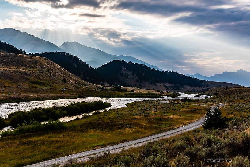 The famous Madison River From the Madison River in Montana.