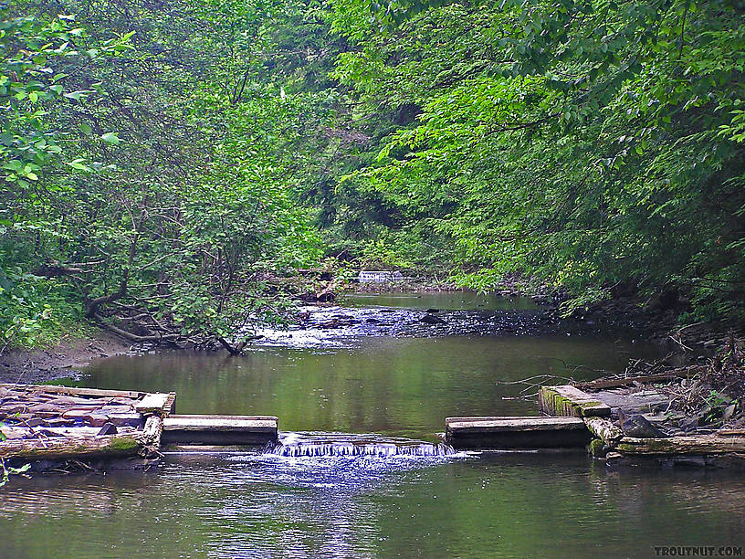 The NY DEC has installed these trout habitat improvements on a small upstate stream.  I found that most fish in the stream orient to them. From the West Branch of Owego Creek in New York.