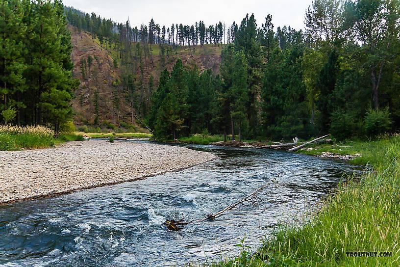 From Rock Creek in Montana.