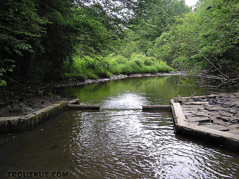 The west branch of owego creek for Trout fishing ny