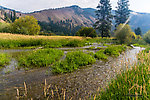 Overflow from a beaver pond cuts a fresh channel through this meadow along Rock Creek. From Rock Creek in Montana.