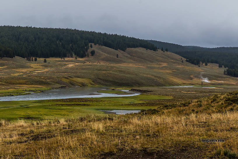 From the Yellowstone River in Wyoming.