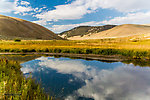 From Big Sheep Creek in Montana.