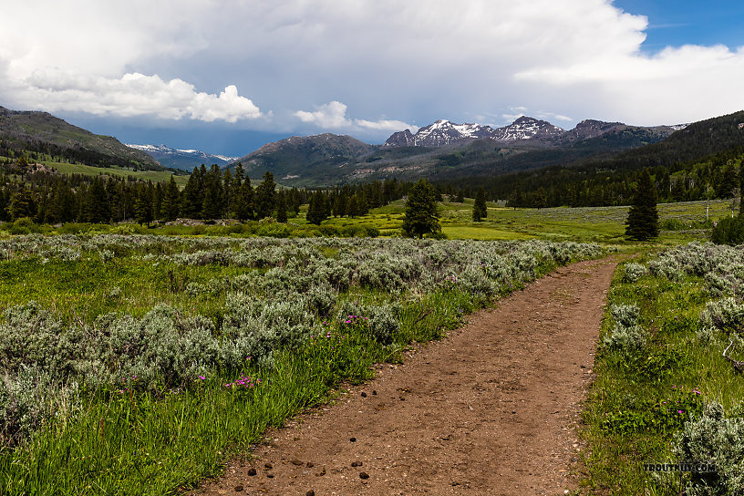 The trail up Slough Creek is one of the most well-trodden in the Yellowstone backcountry, but it still didn't feel crowded at all once we got beyond the first meadow. From Slough Creek in Wyoming.