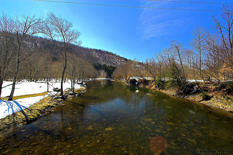 I love how clear the water can be in the Catskills when it hasn't rained for a little while.  A polarizing filter (or sunglasses!) helps, too. From Willowemoc Creek in New York.