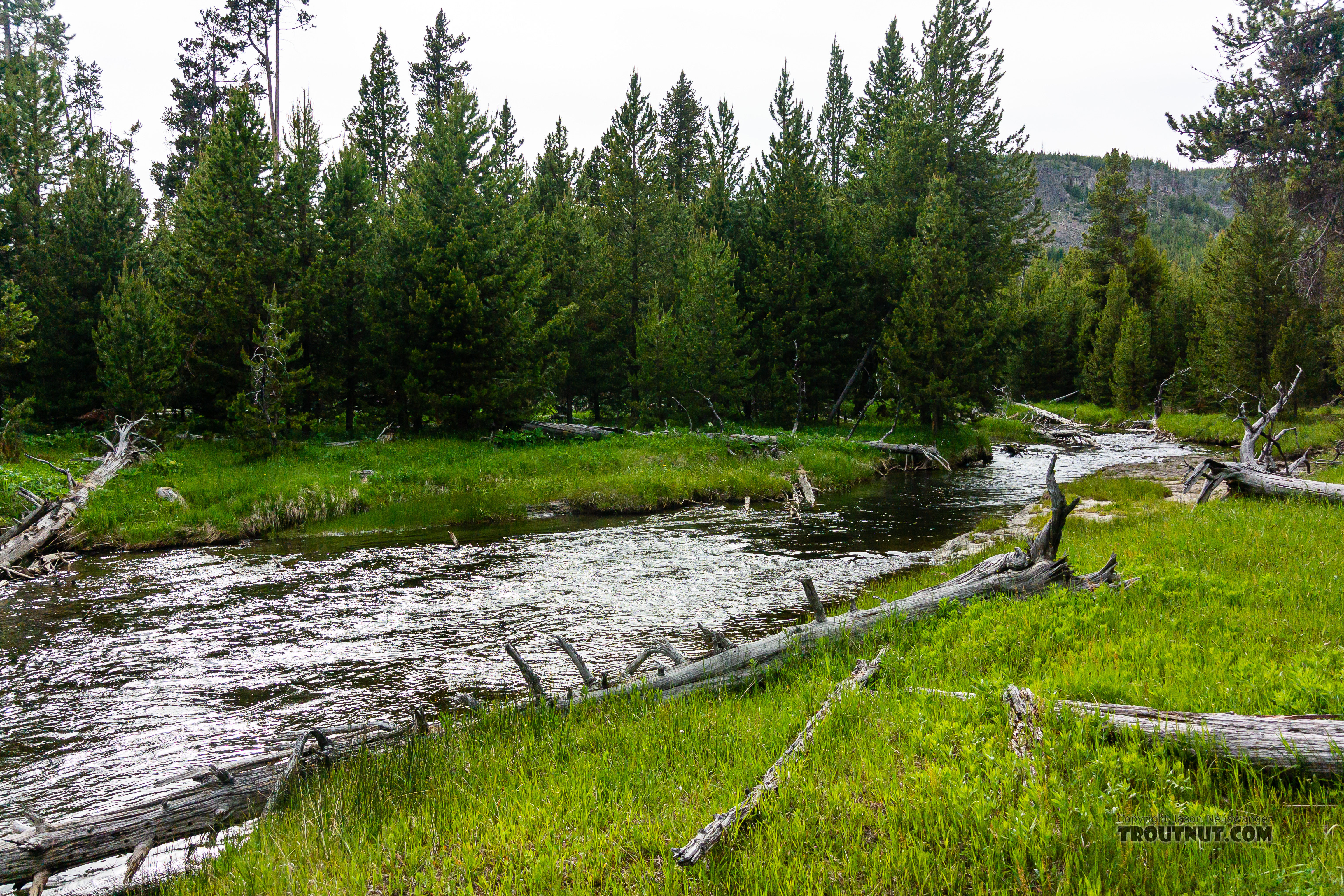 Little Firehole From the Little Firehole River in Wyoming.