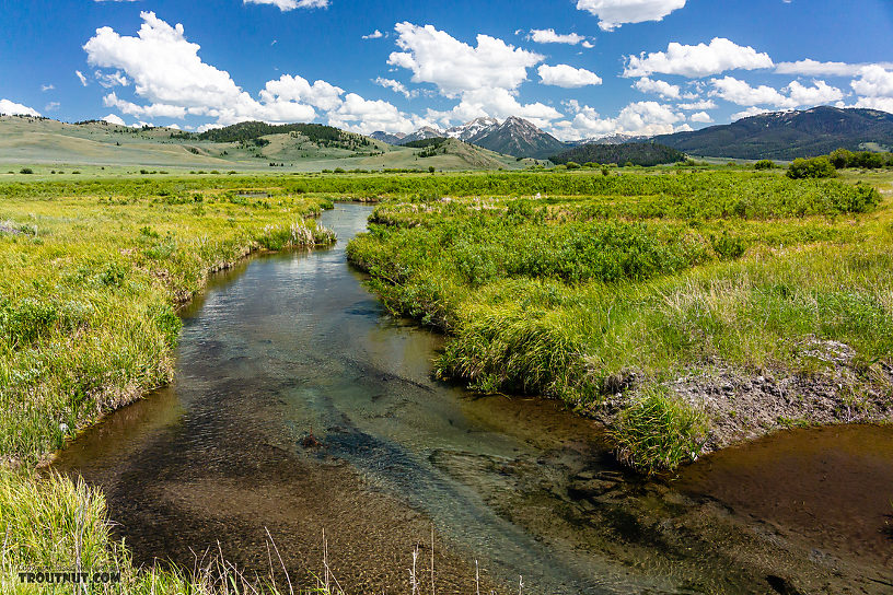 From Mystery Creek # 244 in Montana.