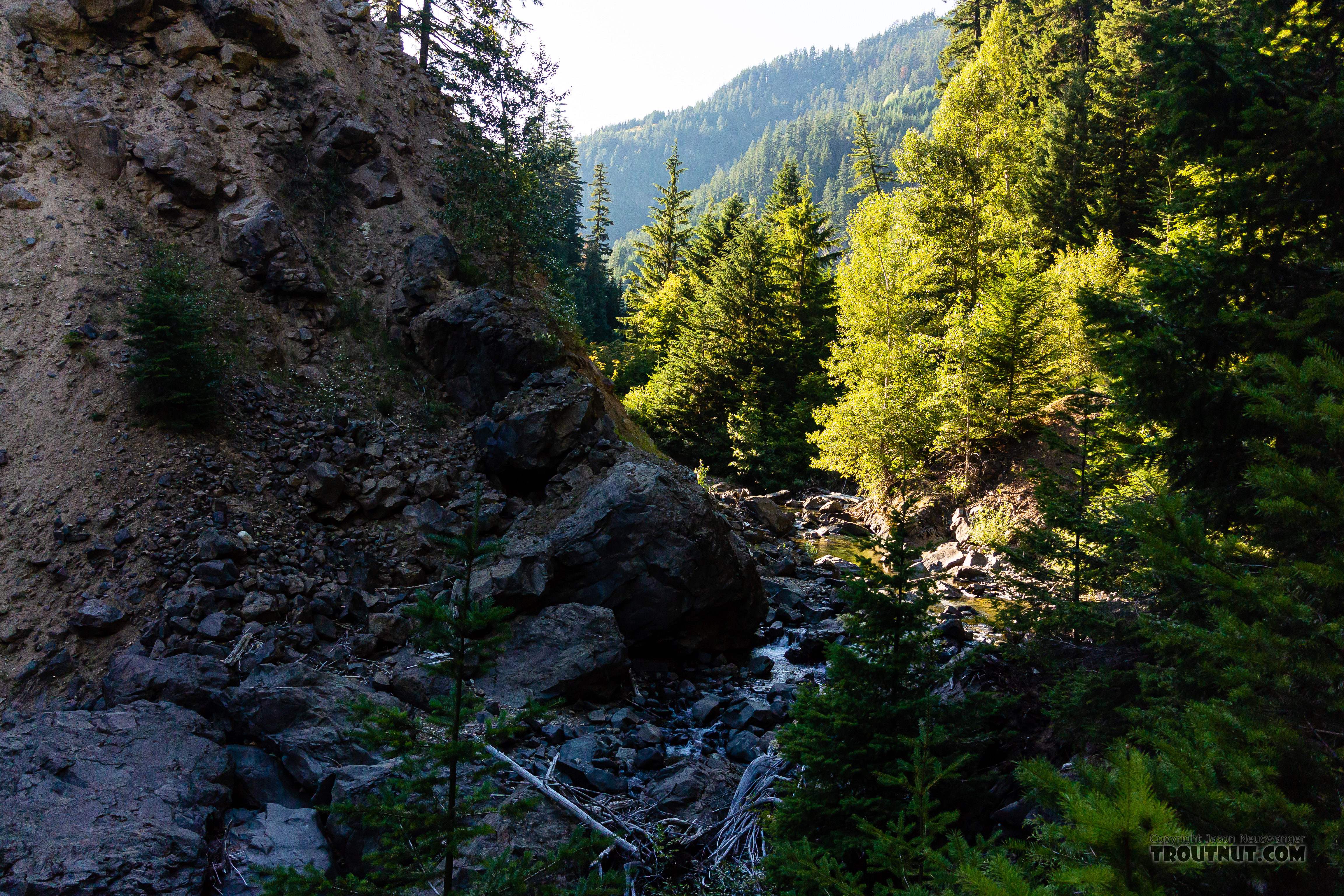 Upper end of the canyon, leading to a longer, low-gradient, gravelly stretch. From Mystery Creek # 249 in Washington.